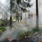 styggkärret, reserve, burning